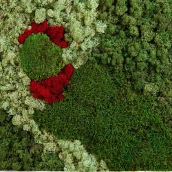 Cadre mural végétal PRAIRIE