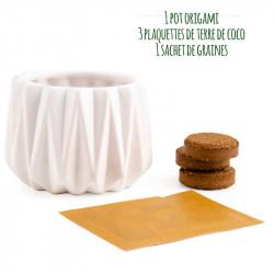 Kit de basilic en pot pour bureau