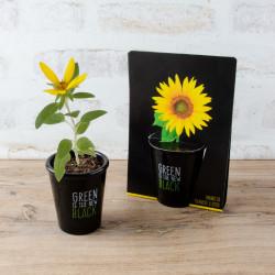 Mini plante de bureau