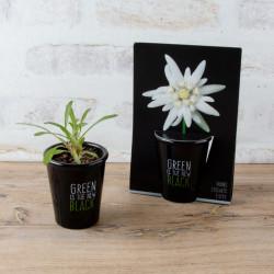 Fleur pour bureau