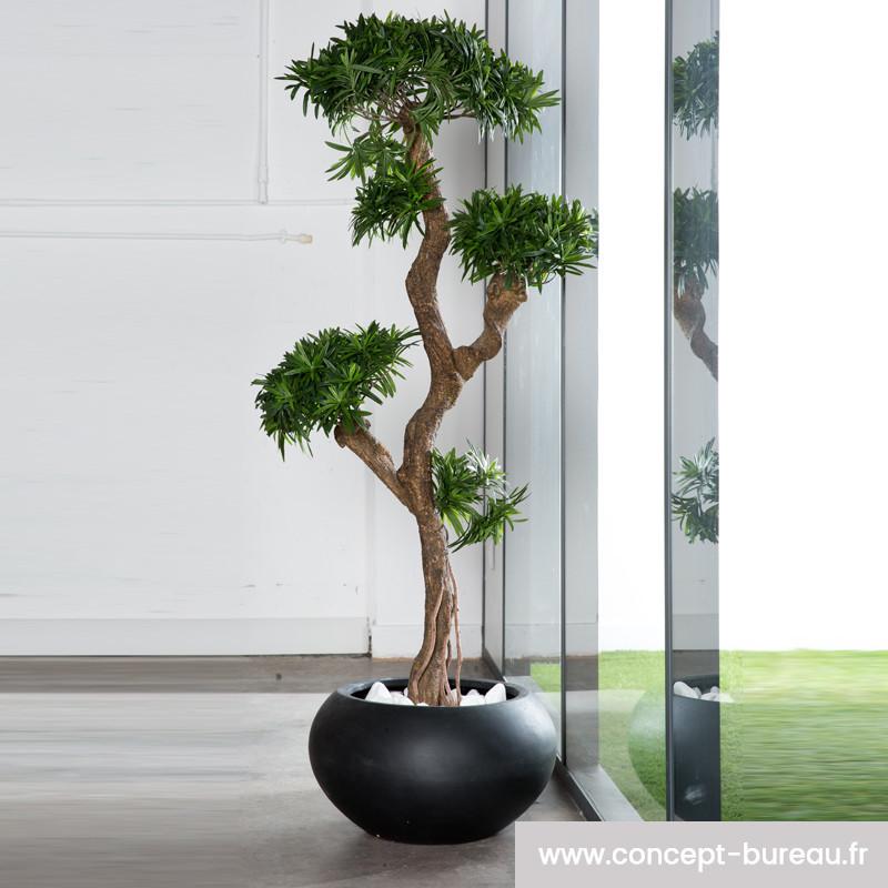 Plante d'intérieur pour le bureau