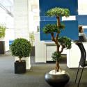 Plante artificielle pour open space