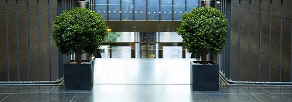 Plantes vertes, pots décoratifs pour l'accueil - Concept Bureau