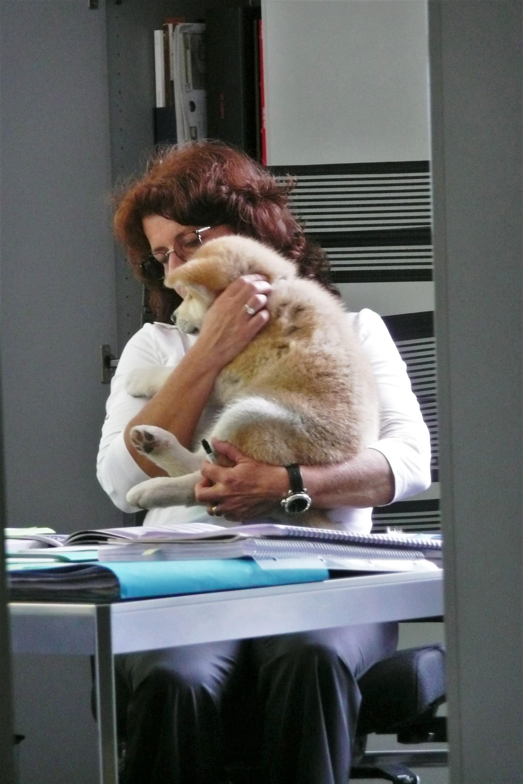 animal de compagnie au travail