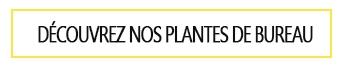 Plante pour le bureau